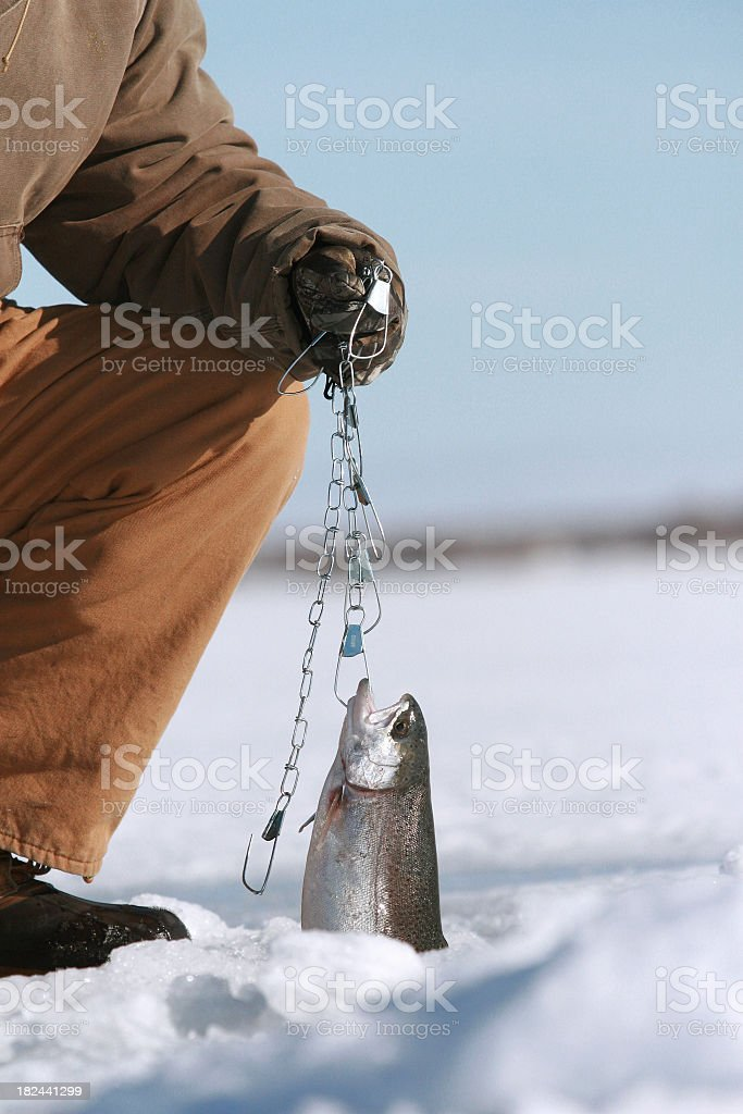Person pulling fish out of ice covered water royalty-free stock photo