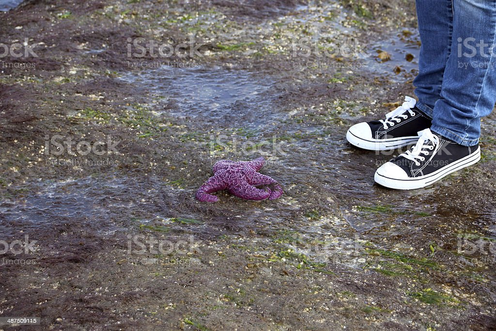 Person standing in front of a Purple Starfish stock photo