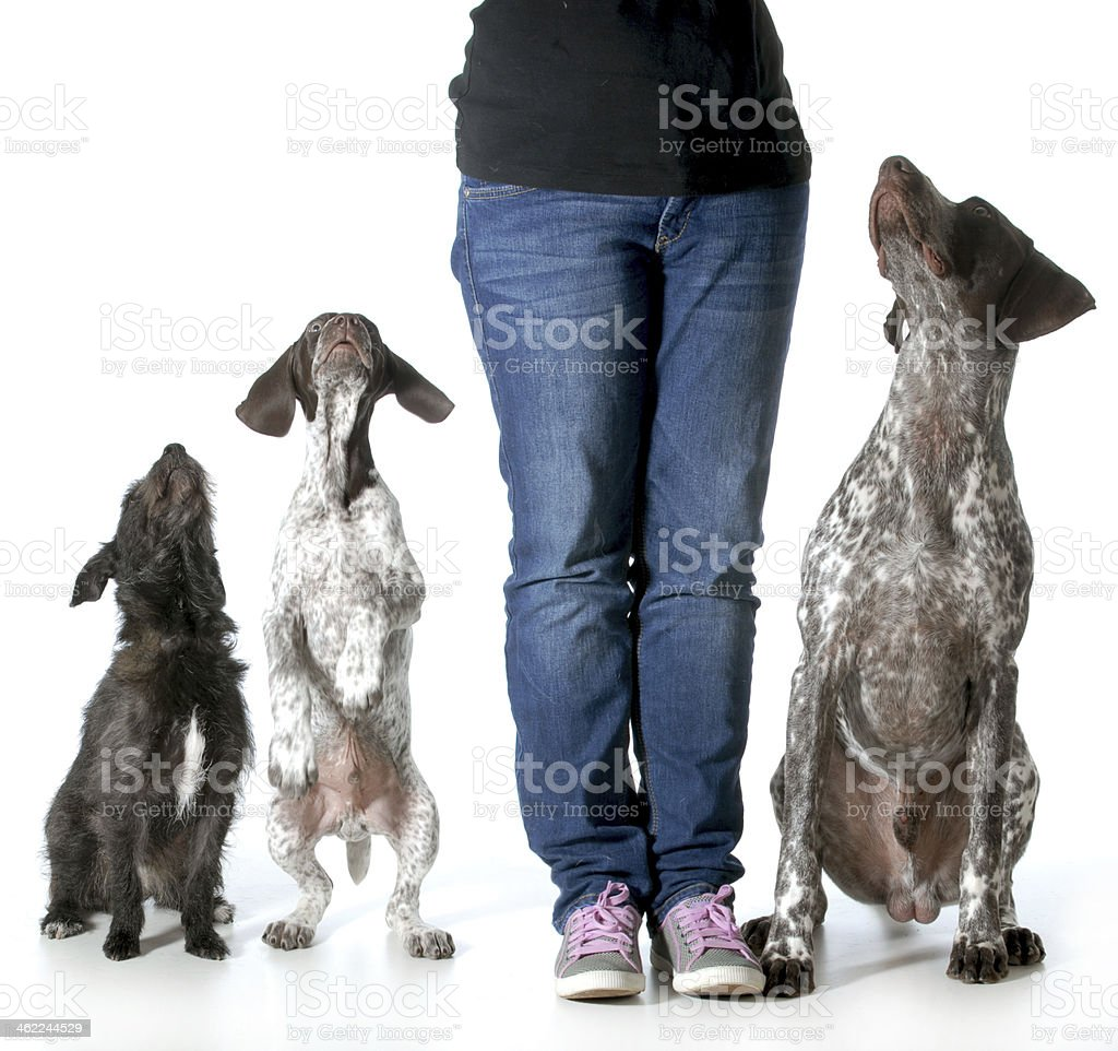 Person standing with their three dogs stock photo