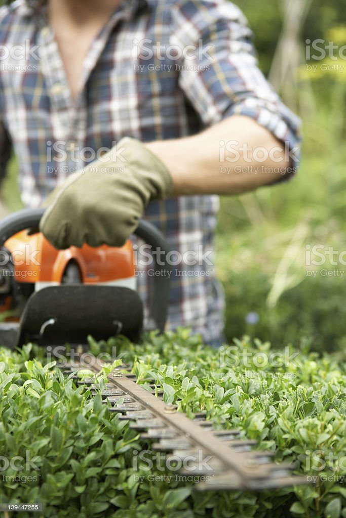 A person using a blade to trim a hedge stock photo