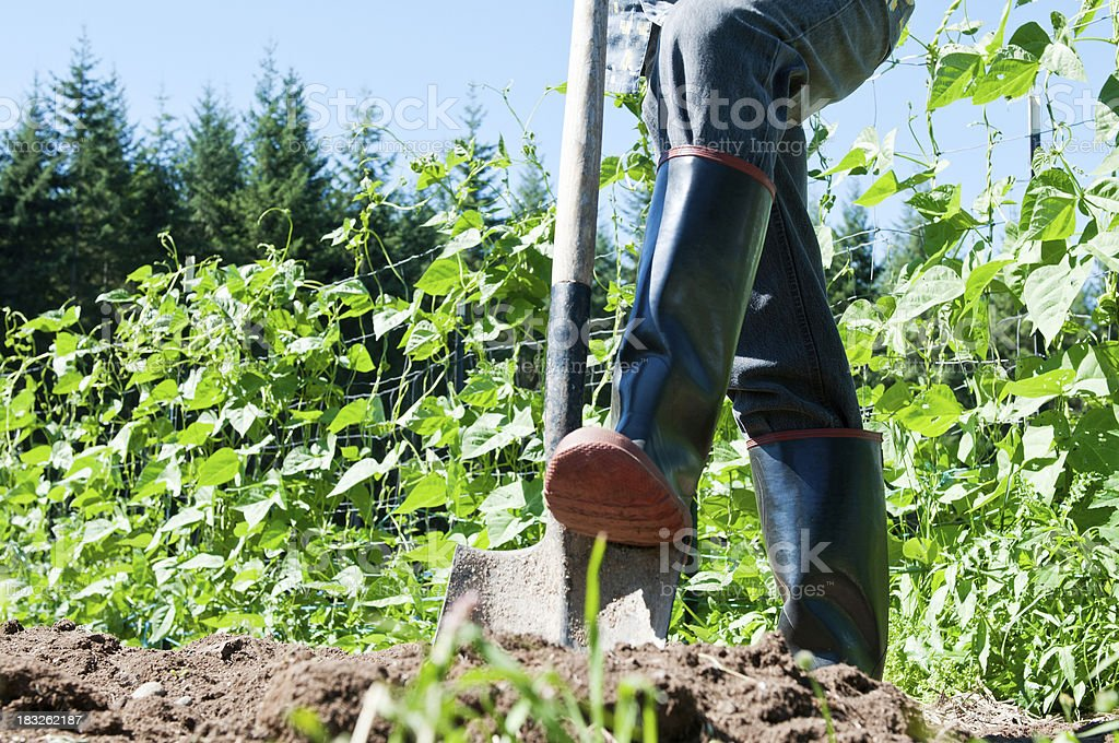 Person working in garden royalty-free stock photo