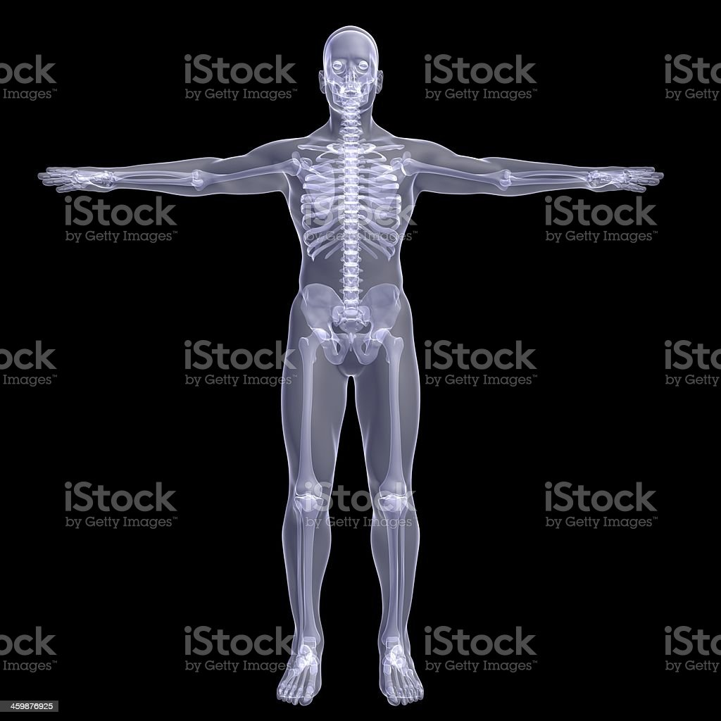 Person. X-ray render stock photo