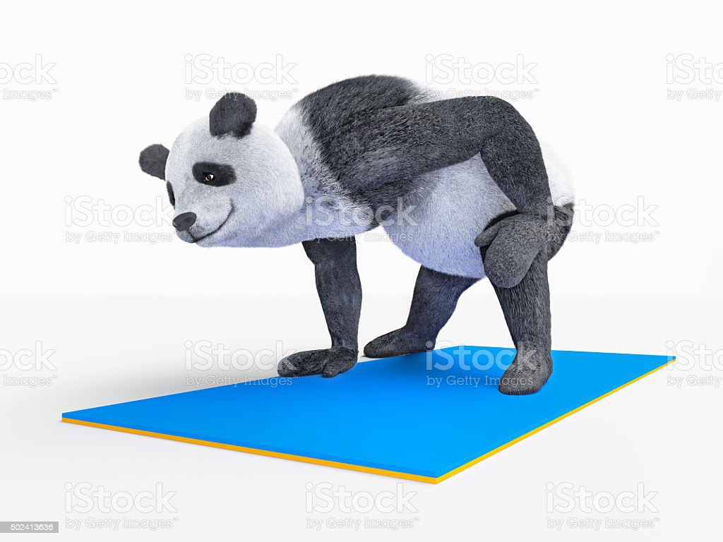 Personage character animal bear panda yoga stretching exercises different postures stock photo