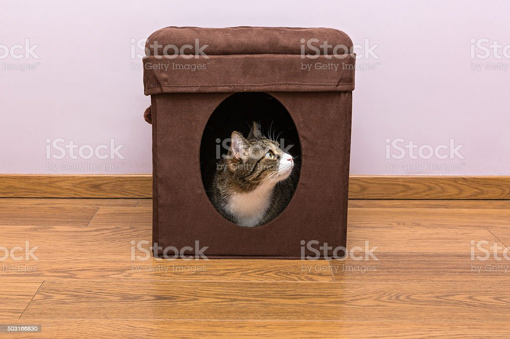 Personal home for the cat stock photo