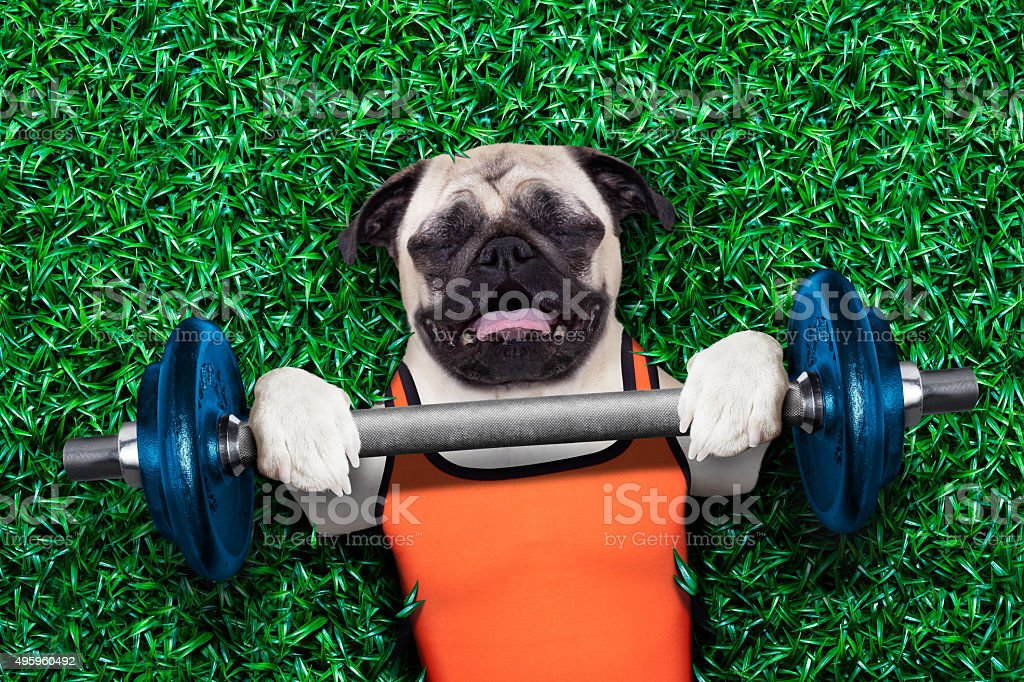personal trainer dog stock photo