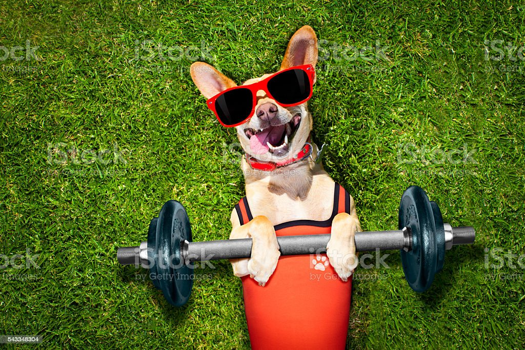 personal trainer sport fitness dog stock photo