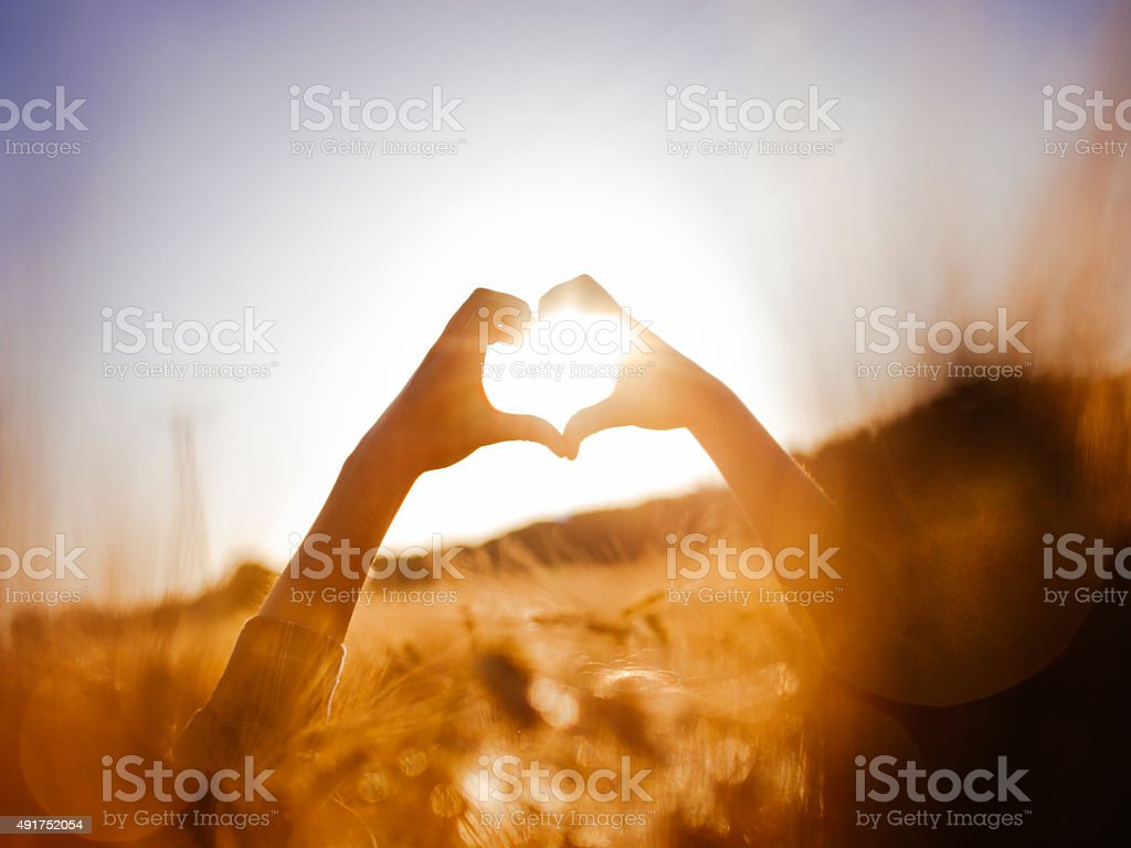 Person's hands over sunlit wheat field in a heart shape stock photo
