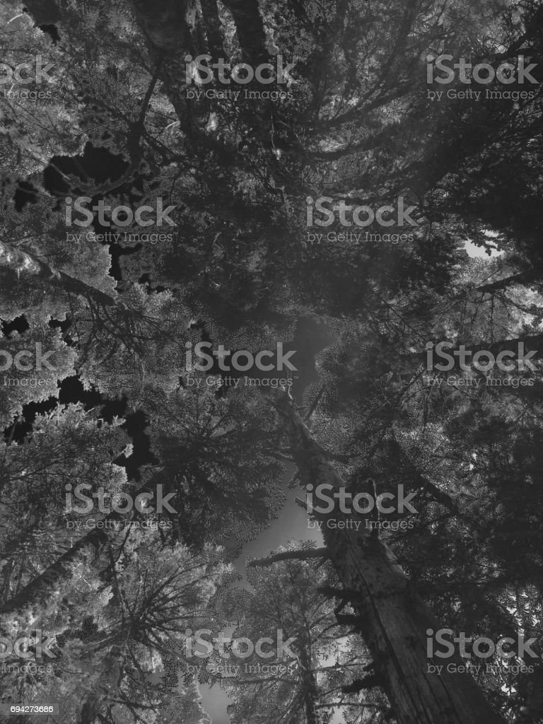 Perspective From A Forest Floor stock photo