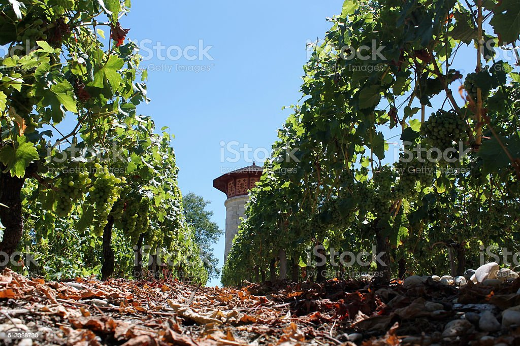 Perspective from a Winery stock photo