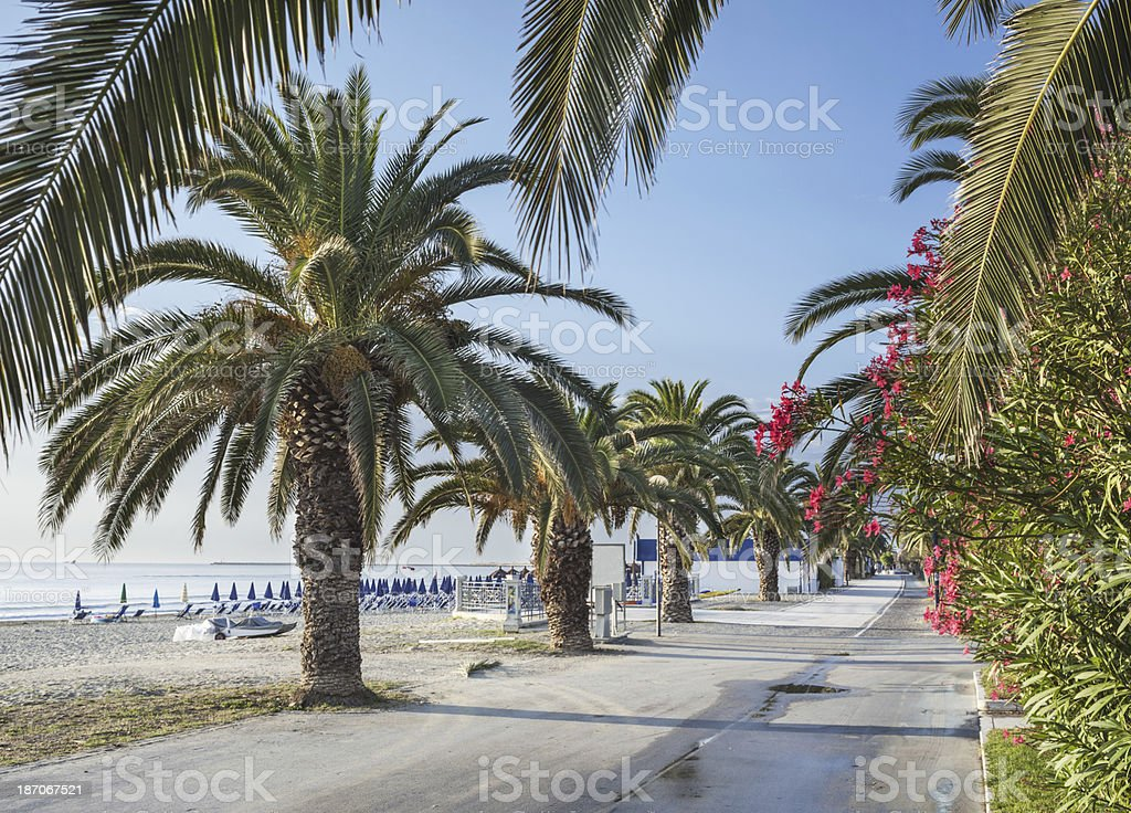 Perspective Palms royalty-free stock photo