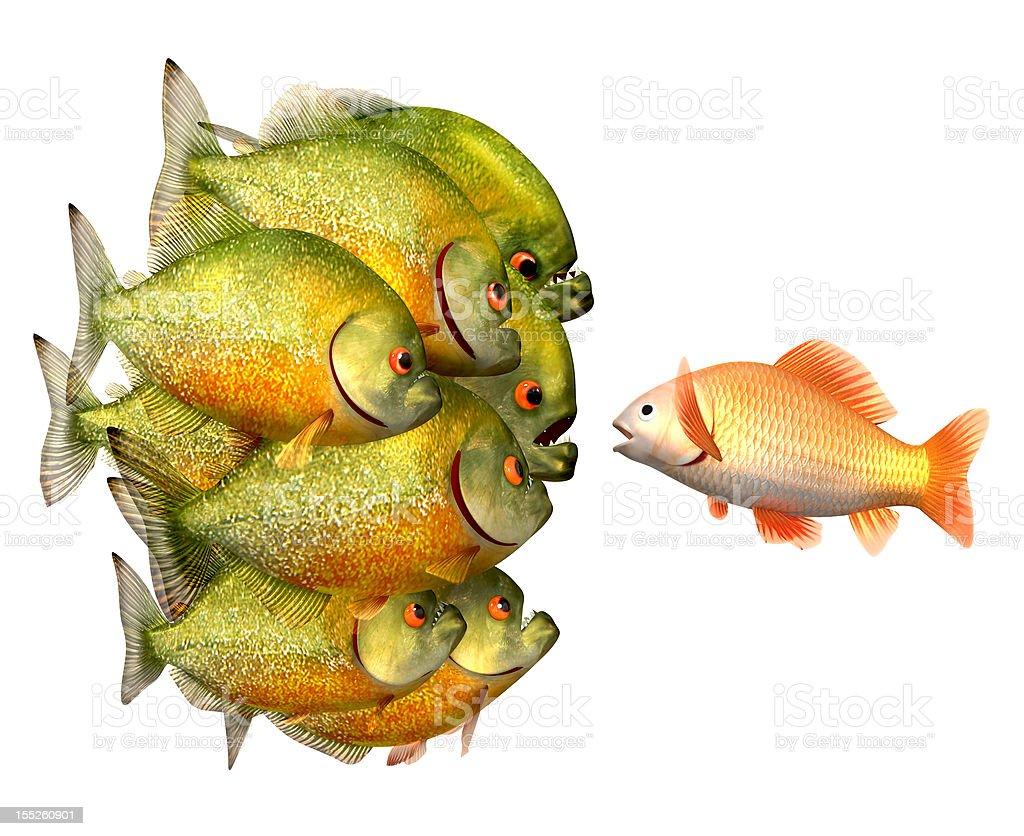 Persuasion concept, goldfish and piranhas stock photo