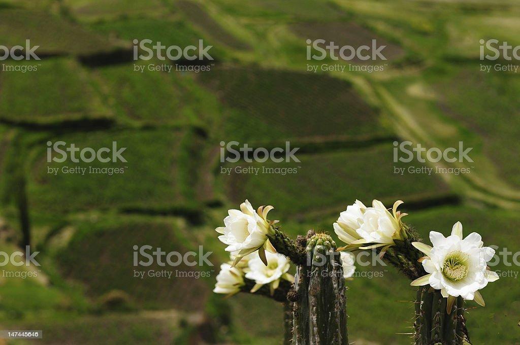 Peru, Colca Valley stock photo