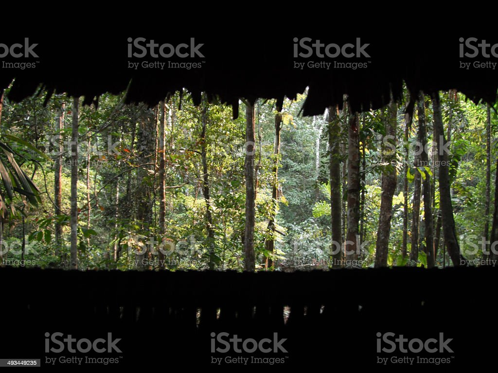 Peru: View from a Blind in the Amazon stock photo