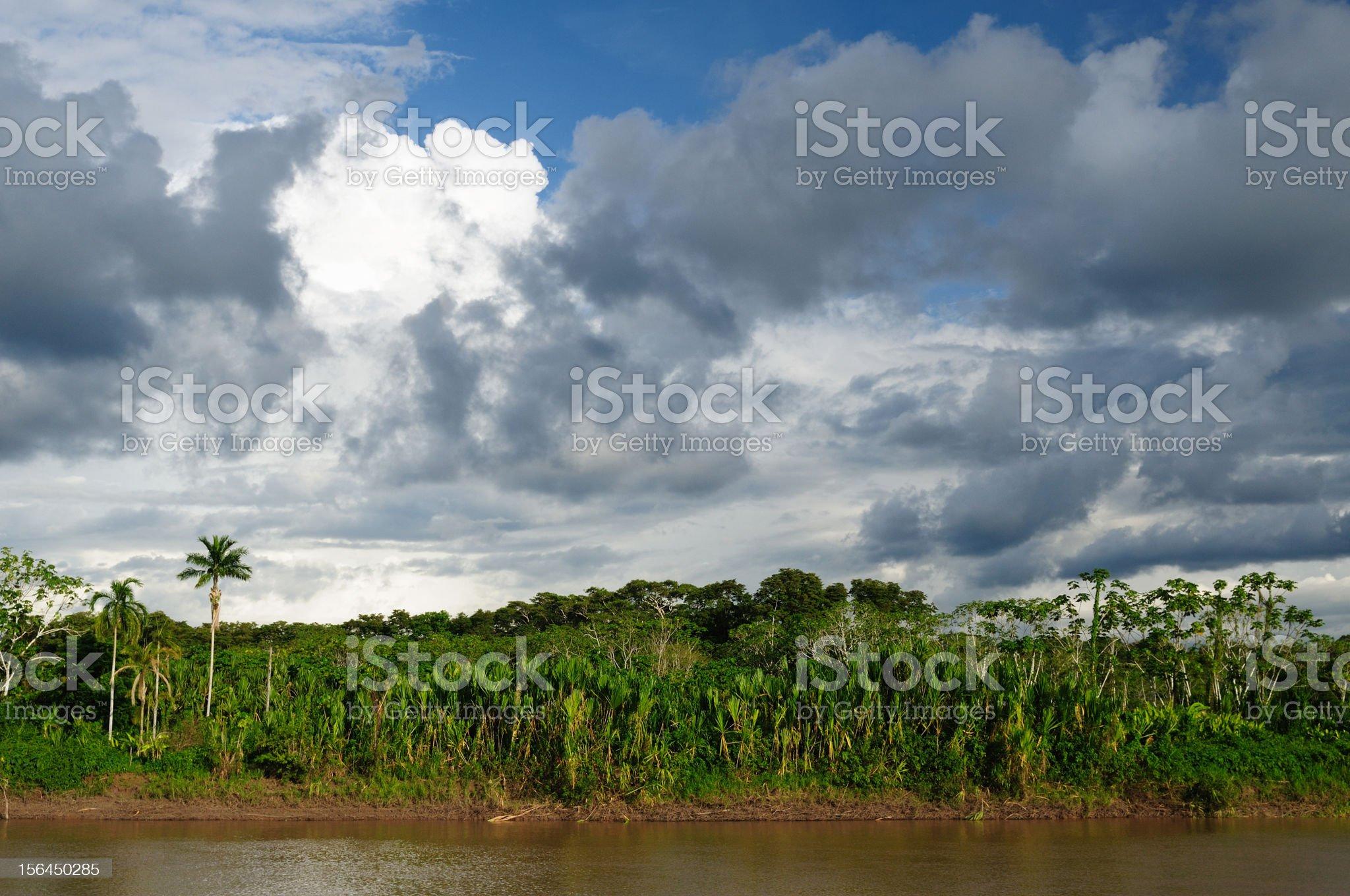 Peruvian Amazonas royalty-free stock photo