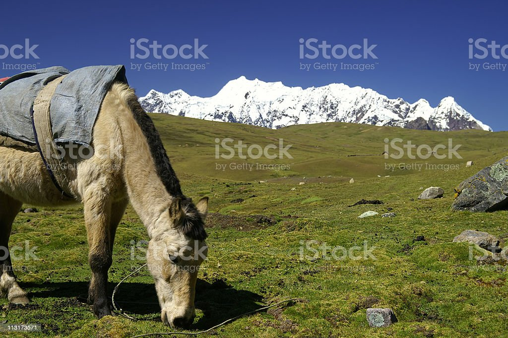 Peruvian Andes royalty-free stock photo