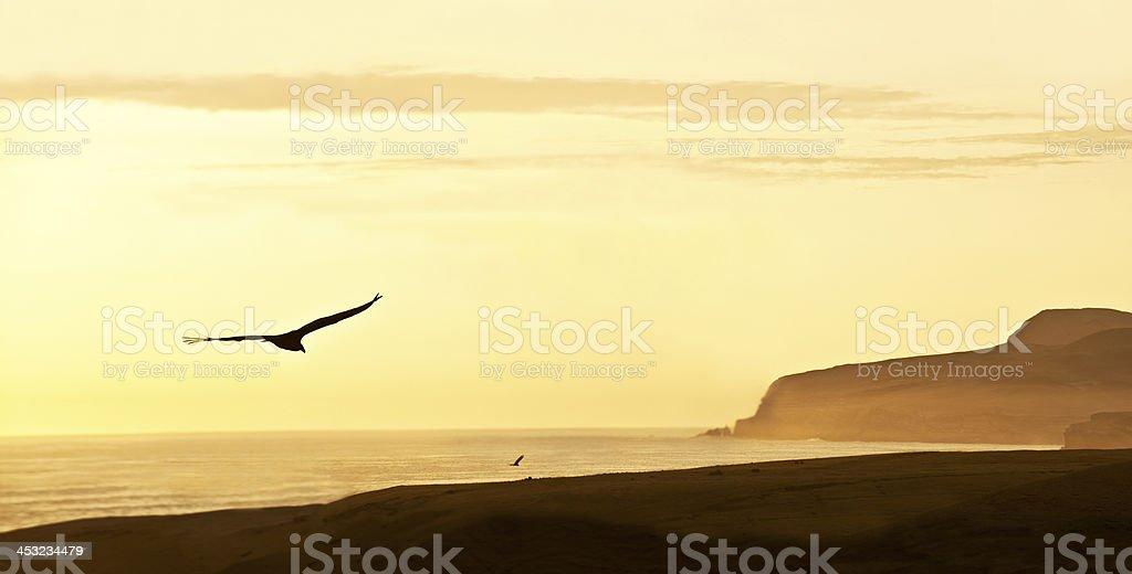 Peruvian Coastline, Paracas National Reserve, Peru stock photo