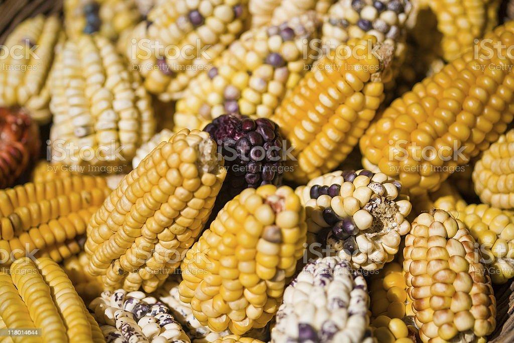Peruvian Corn stock photo
