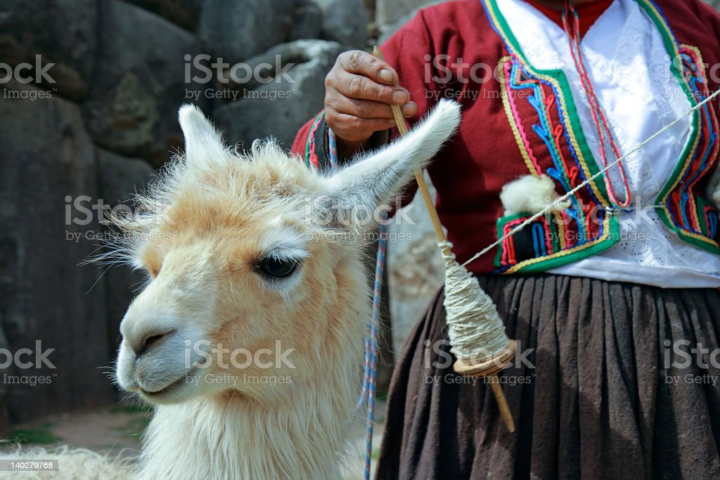 Peruvian llama standing next to a woman spinning stock photo