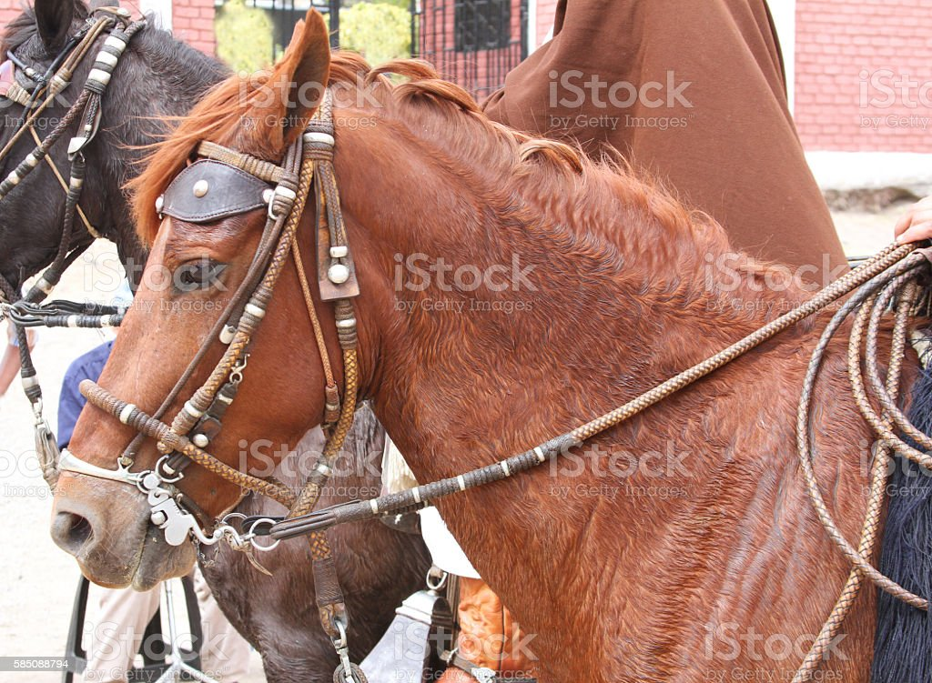 Peruvian Paso Horse stock photo