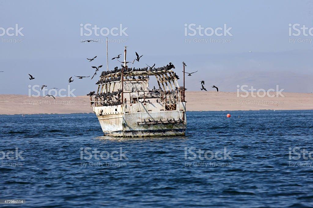 Peruvian Royal Terns stock photo