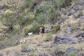 Peruvian Sheperdess Tending Flock