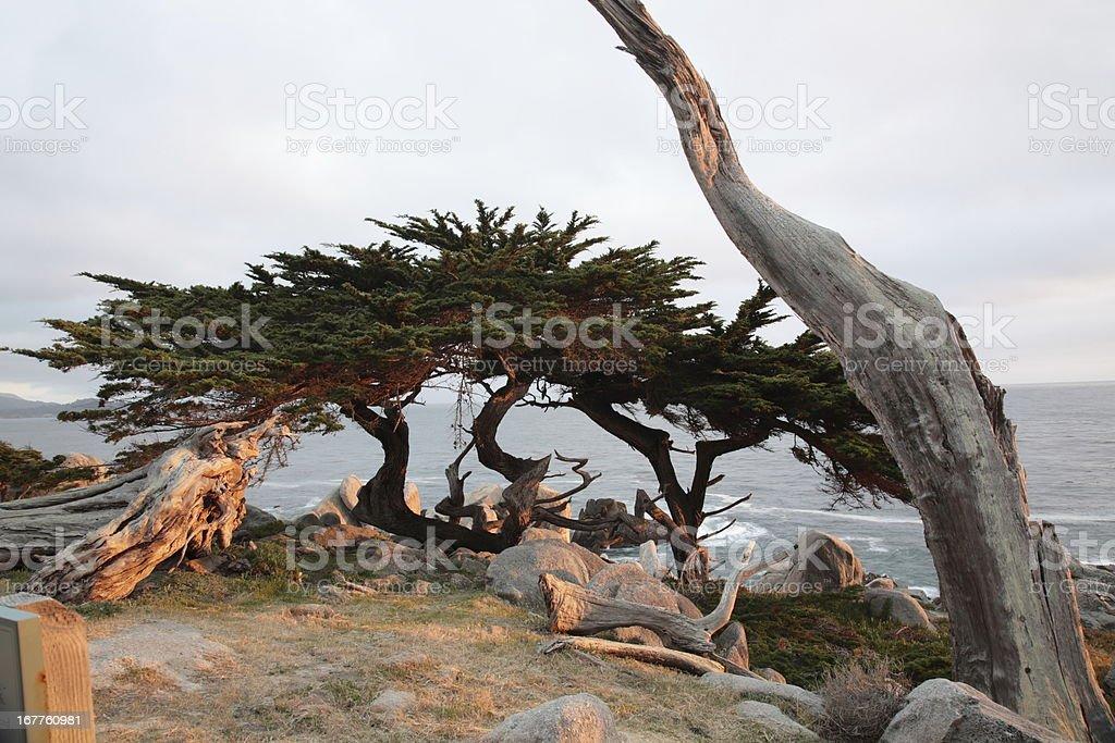 Pescadero Point at 17 Mile Drive in California stock photo