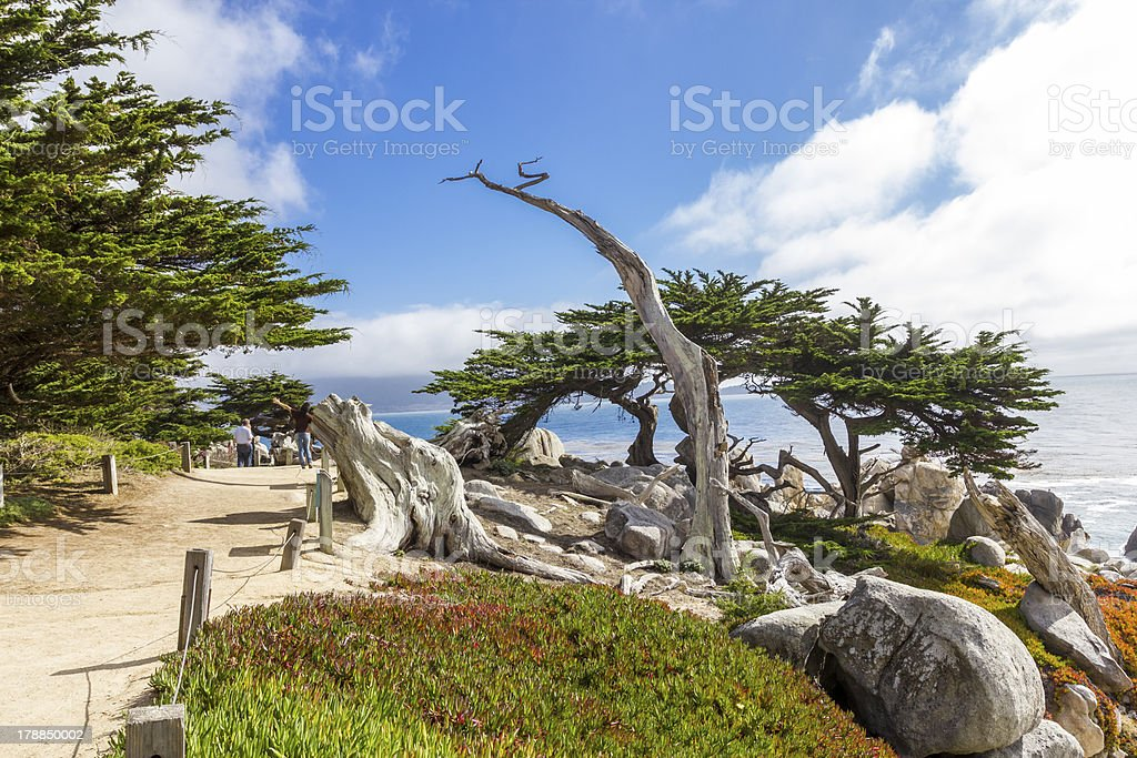 Pescadero Point at 17 Mile Drive, Pebble Beach royalty-free stock photo