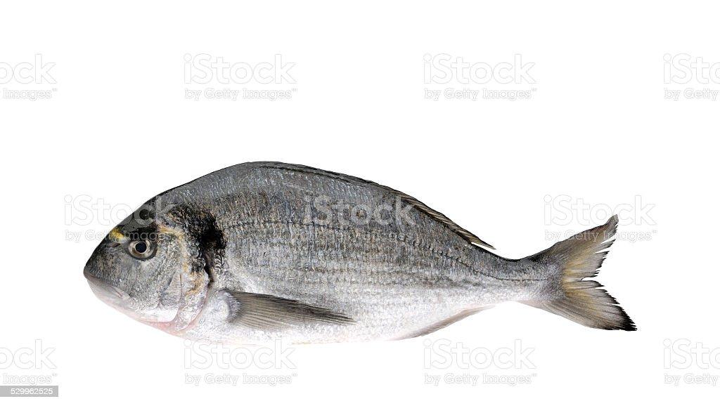 Pesce Orata stock photo