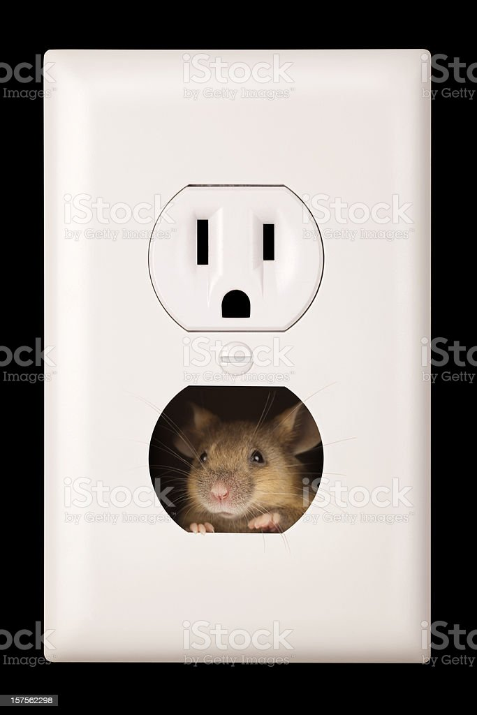 Pesky Mouse Living in Electrical Wall Outlet royalty-free stock photo