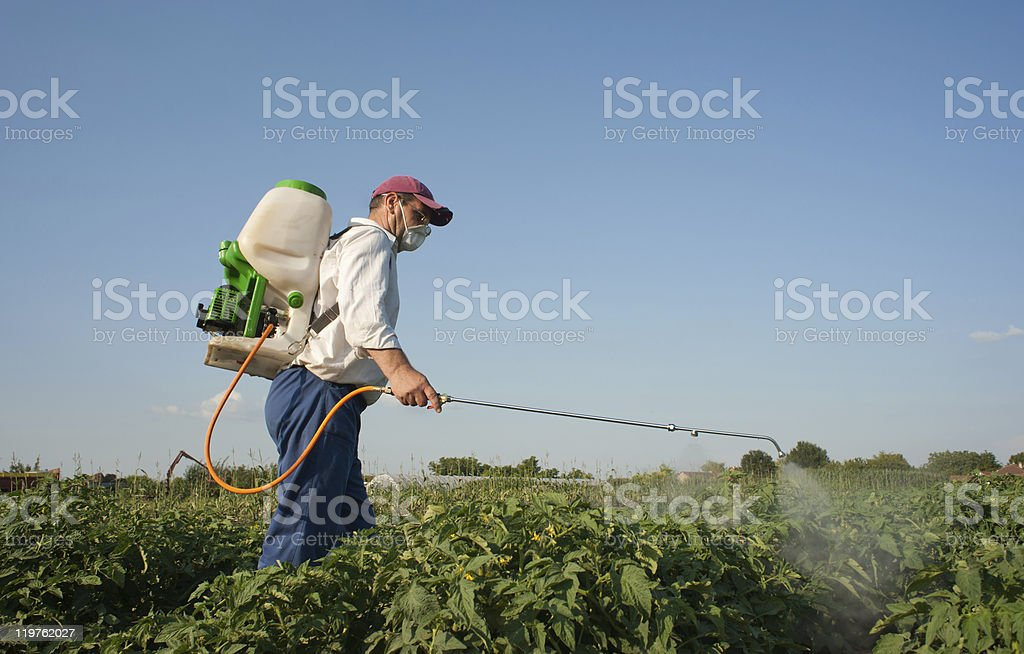 Pest control staff is spraying pesticide on plants royalty-free stock photo