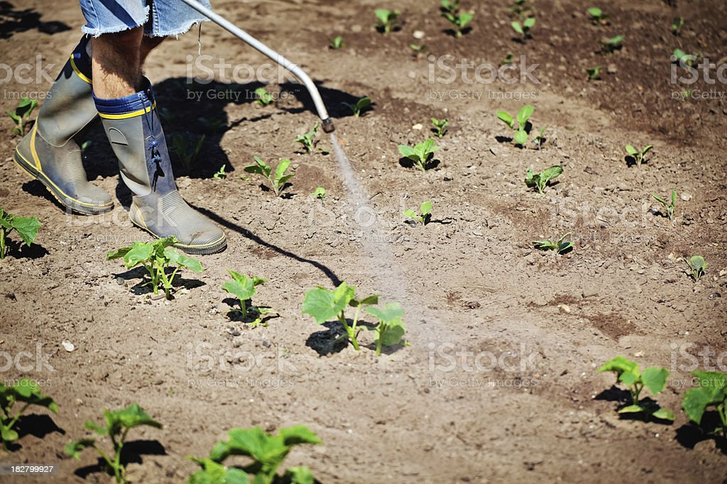 Pest Control Worker Insecticide Spraying of a plant field royalty-free stock photo