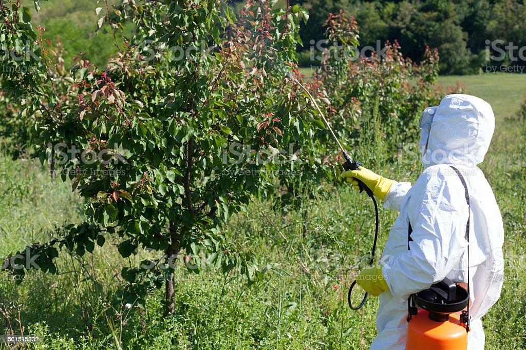 Pesticide spraying stock photo