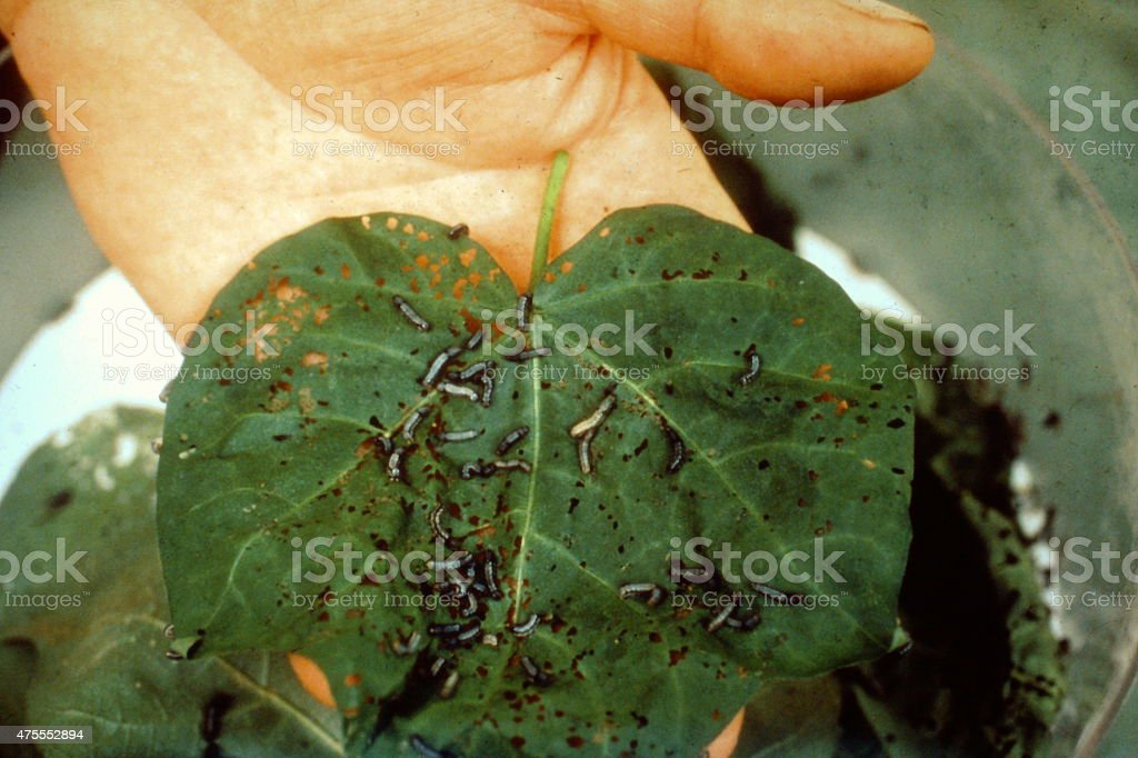 pests of plants and leaves stock photo