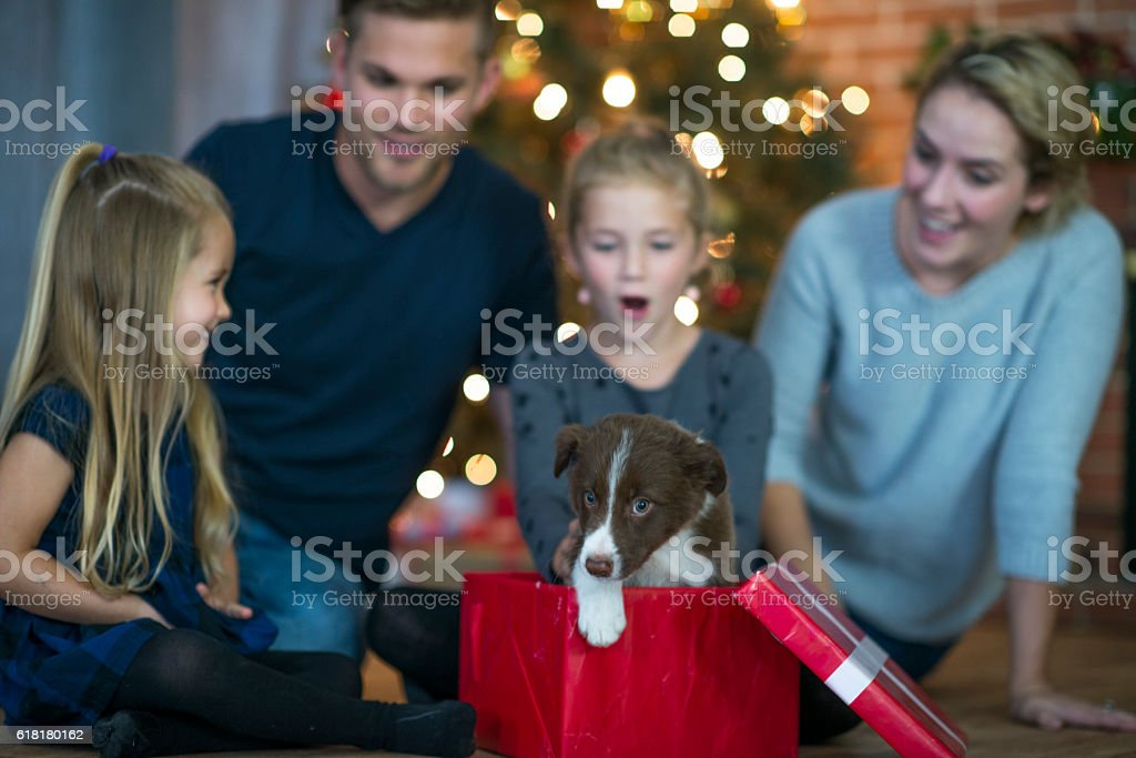 Pet Adoption on Christmas stock photo
