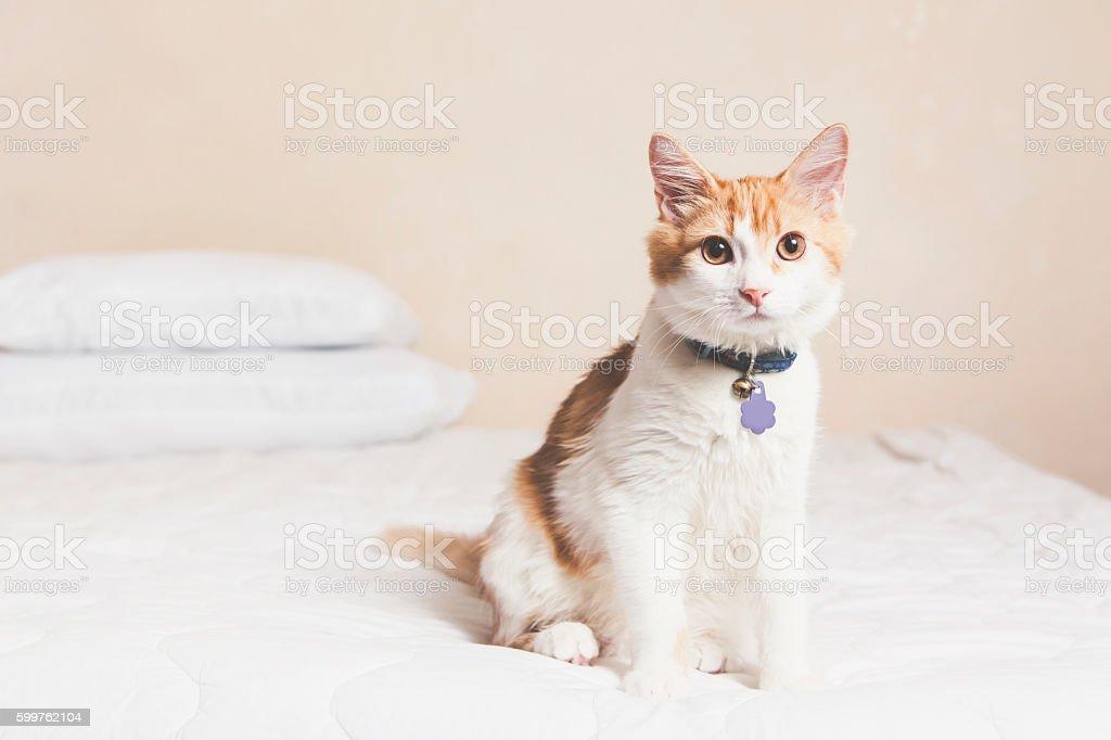 Pet Allergy Concept stock photo