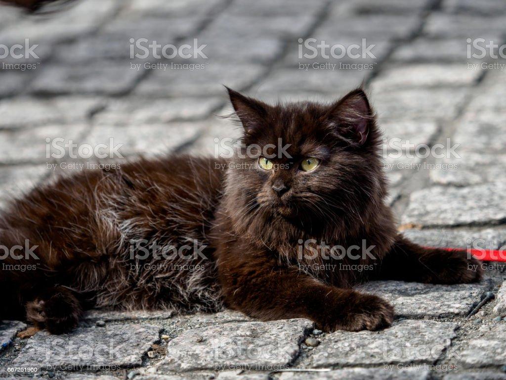 Pet animal Cute Cat stock photo