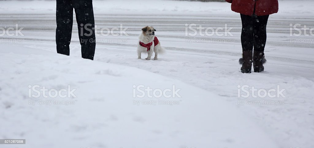 Pet animal stock photo
