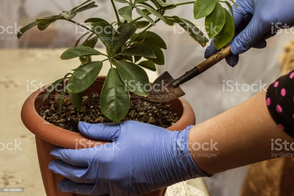 pet care plants stock photo
