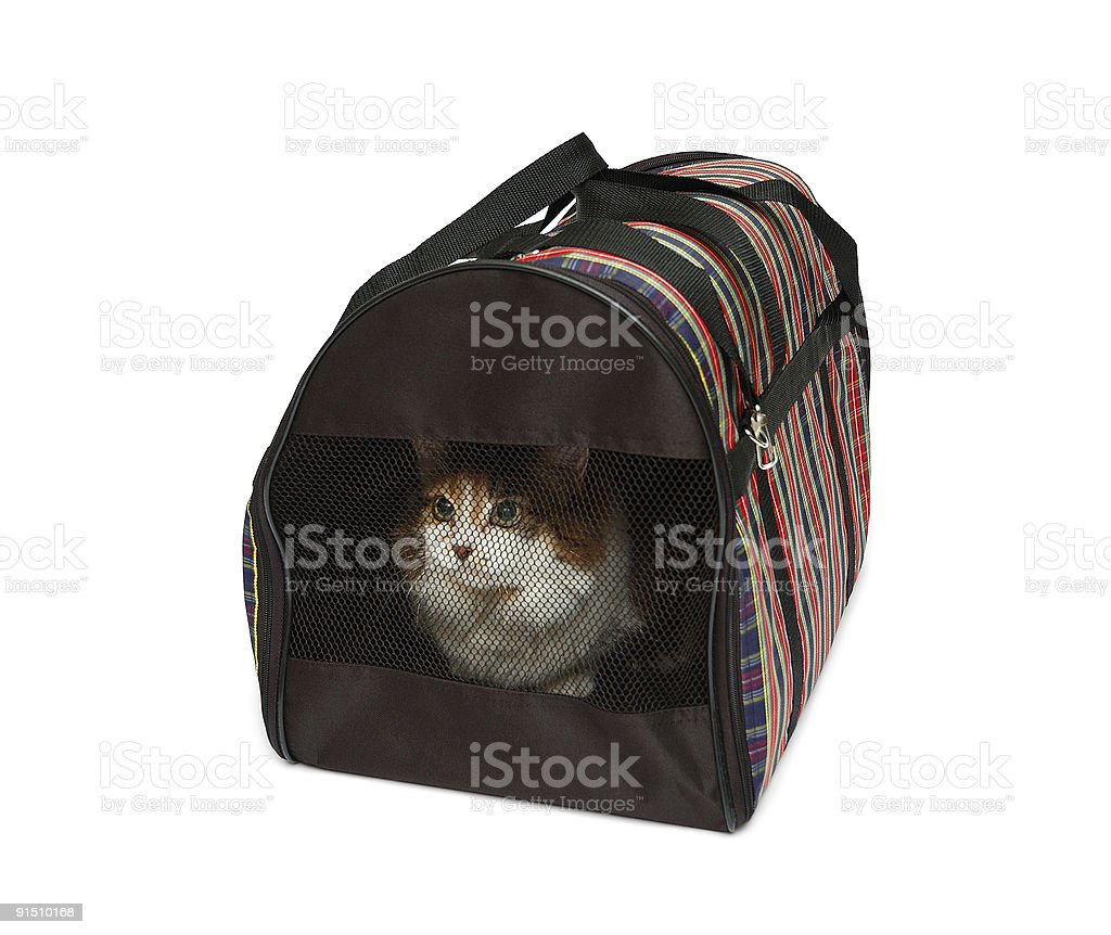Pet carrier with cat royalty-free stock photo