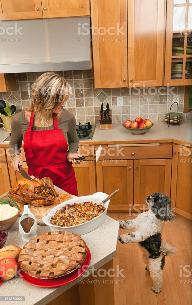 Pet Dog Begging for Thanksgiving Turkey from Woman in Kitchen royalty-free stock photo