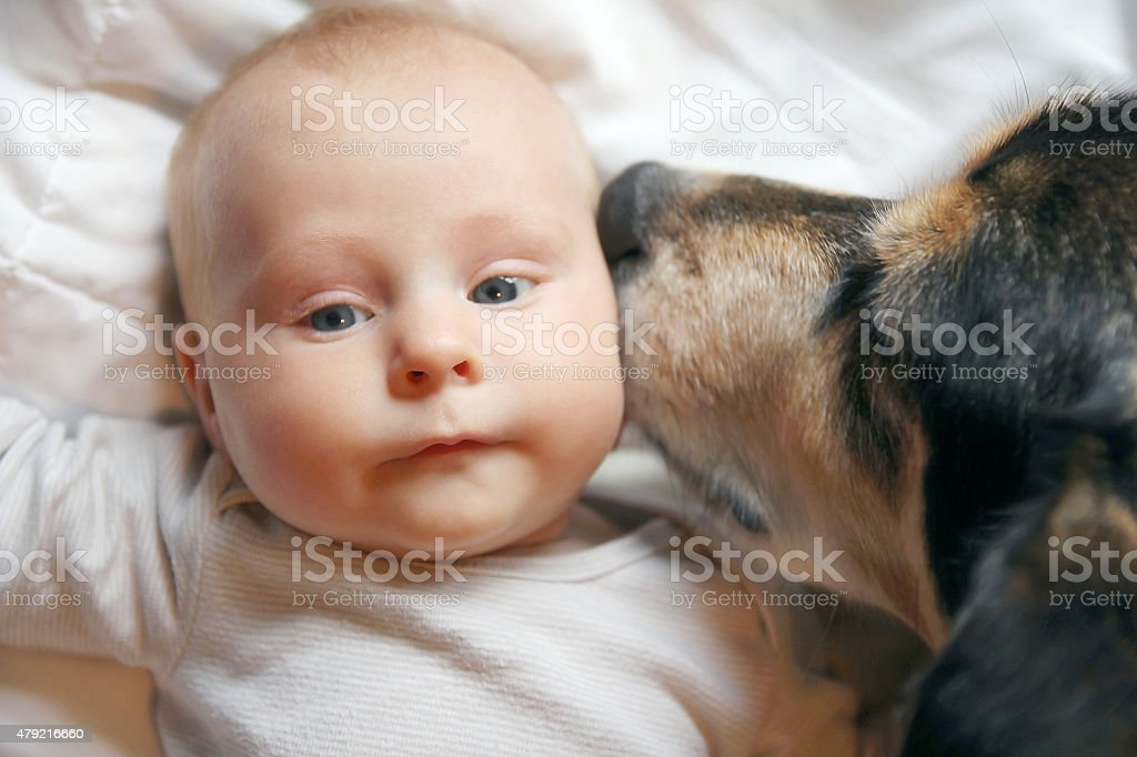 Pet Dog Kissing Two Month Old Baby stock photo