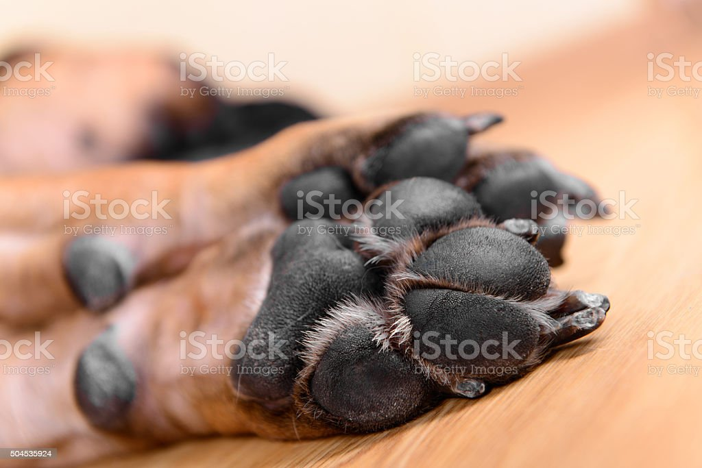 pet dog pads stock photo
