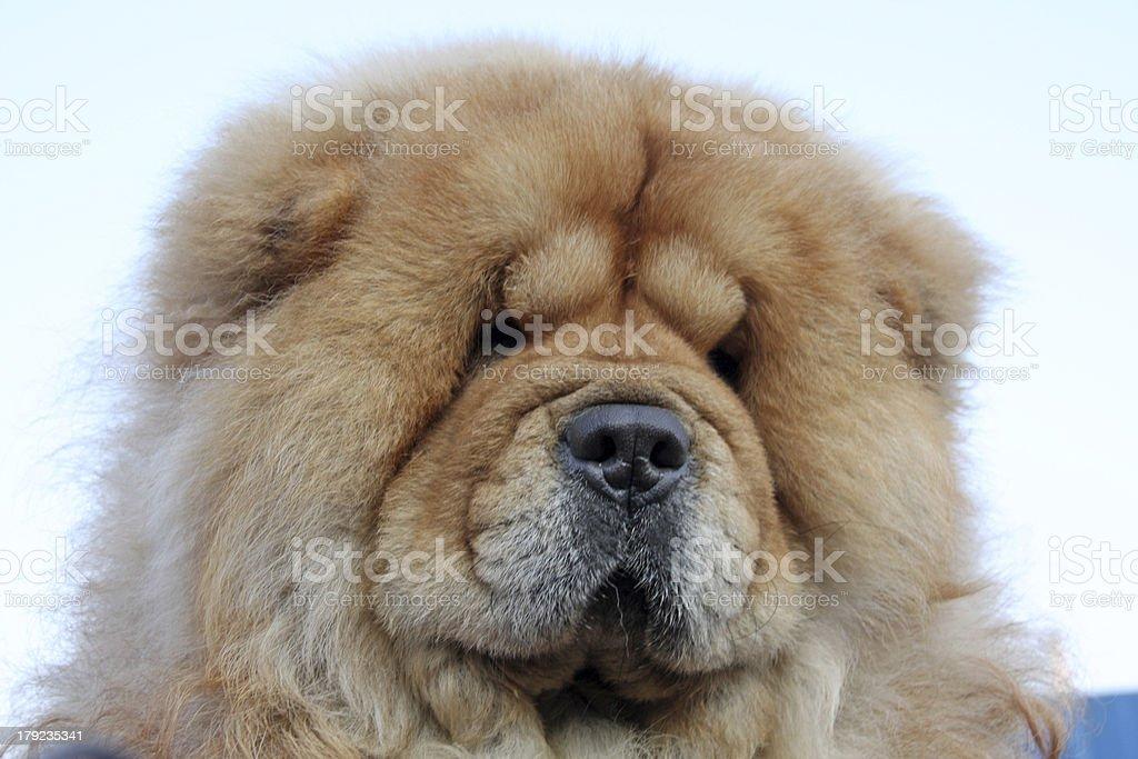 pet dog royalty-free stock photo