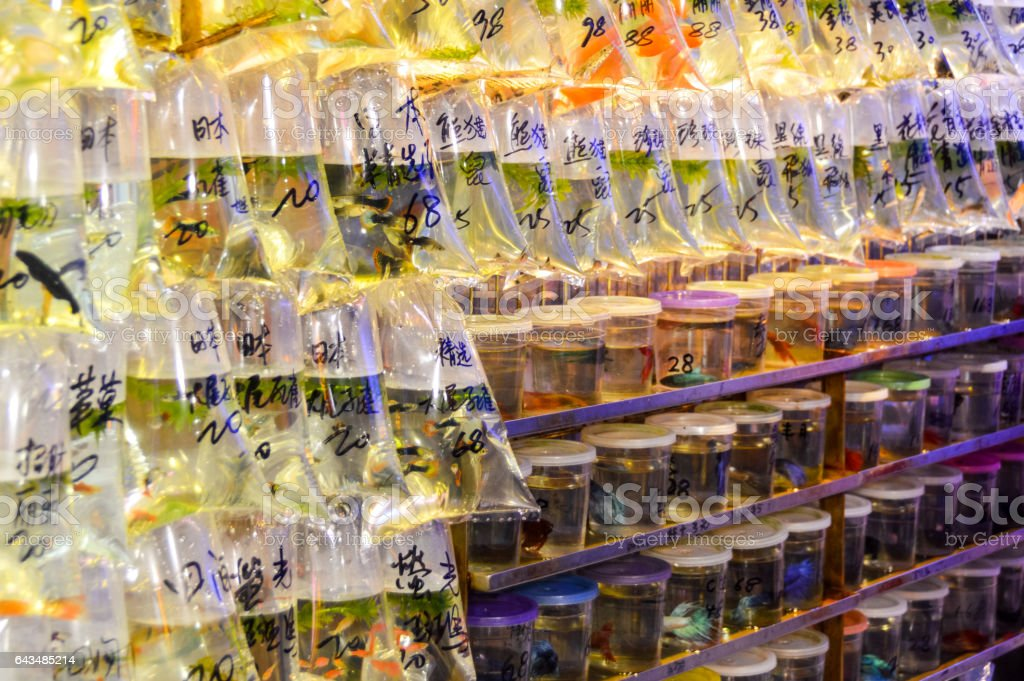 Pet fish market in Hong Kong stock photo