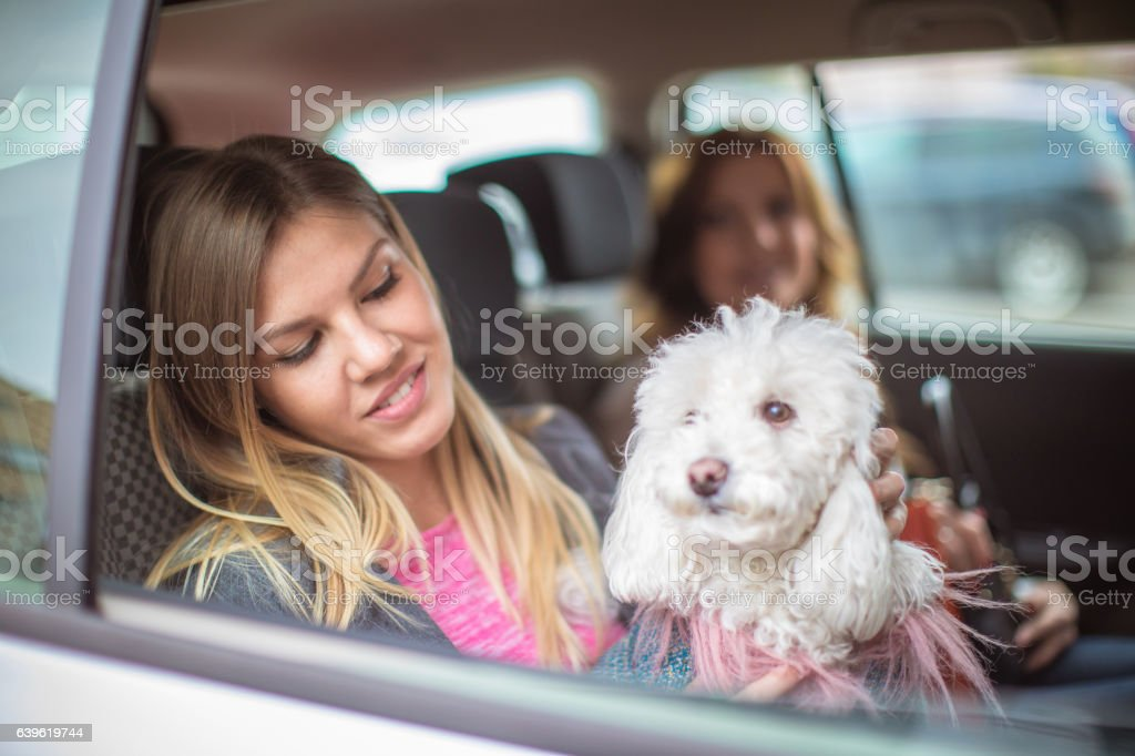 Two sisters taking a taxi ride with a poodle dog, returning from...
