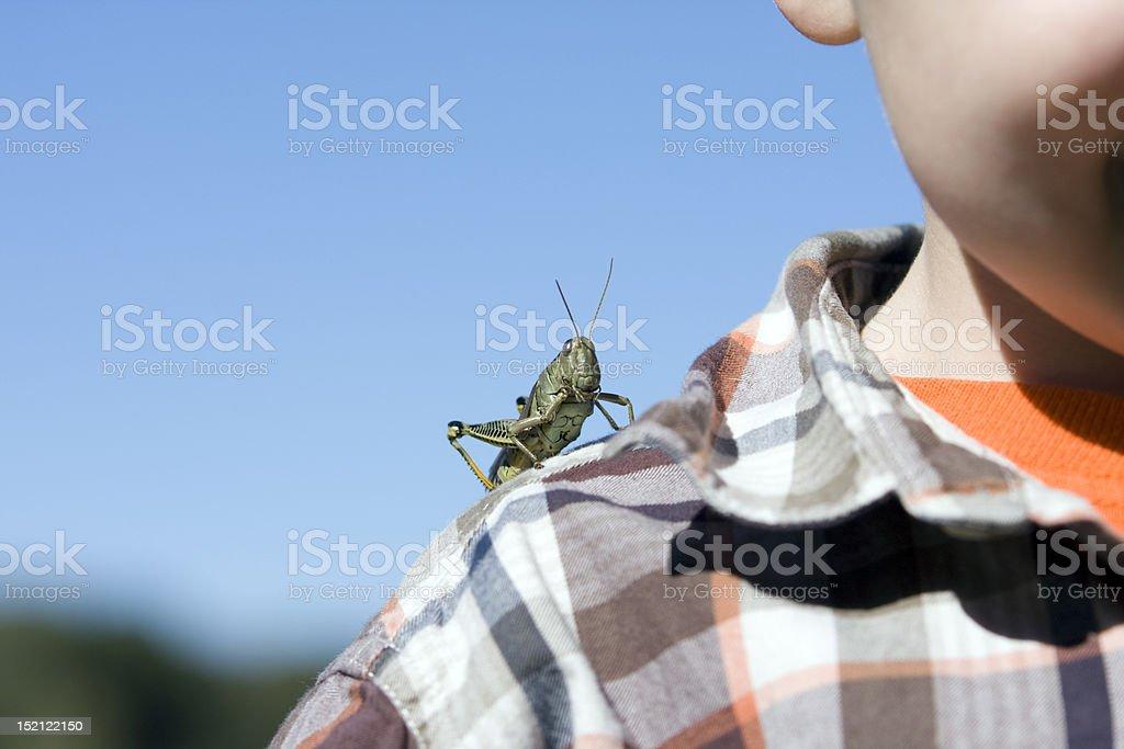 Pet grasshopper royalty-free stock photo
