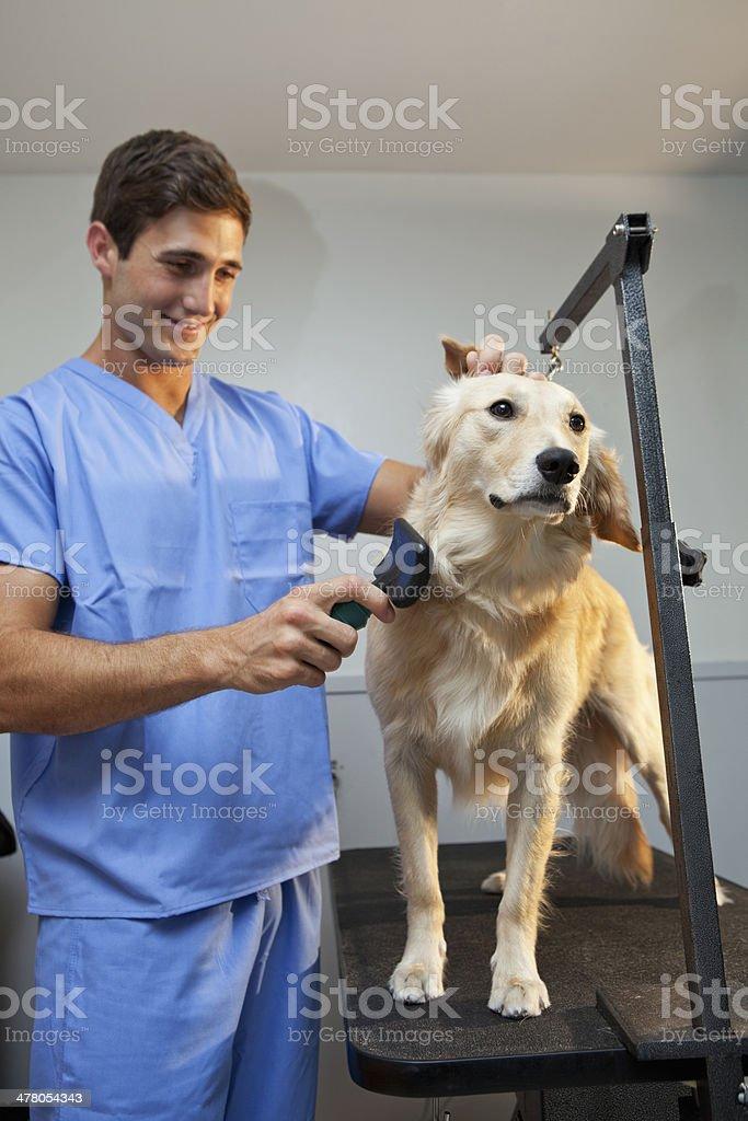 Pet groomer royalty-free stock photo