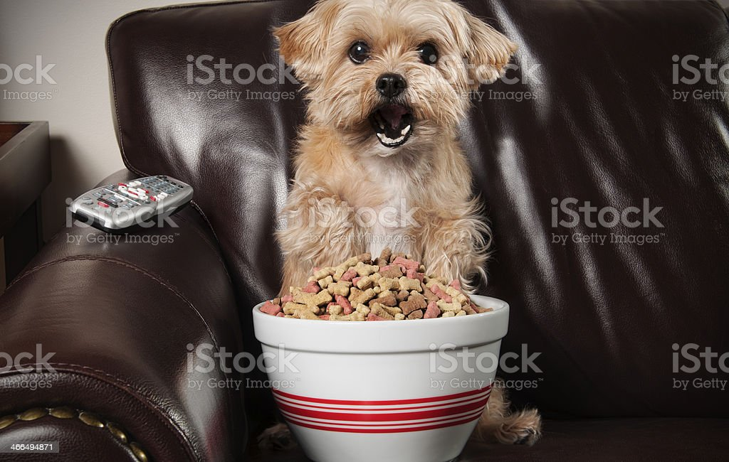 Dog sitting on couch with large bowl of dog treats. Please see my...