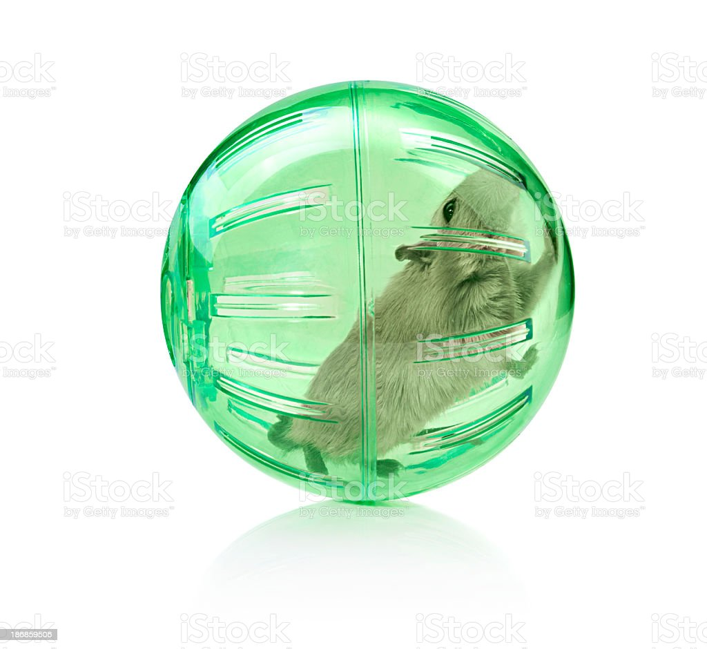 Pet in a ball stock photo