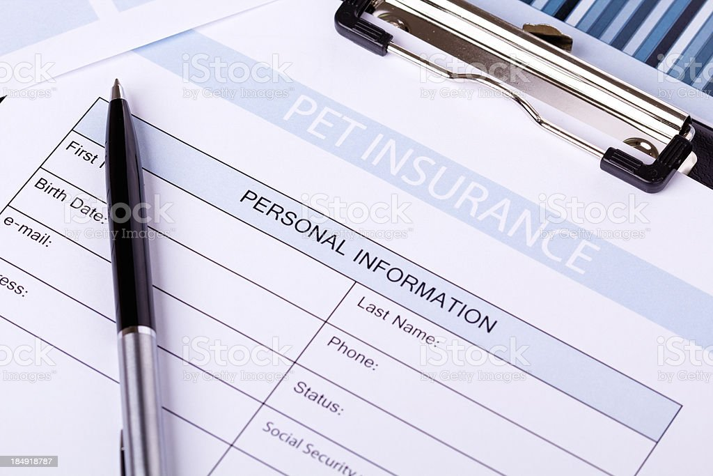 Pet Insurance stock photo